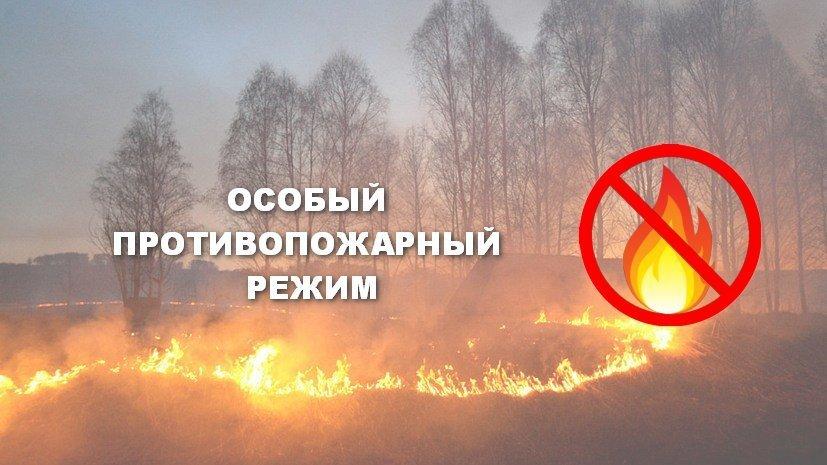 На ближайшие дни в Тамбовской области установлен особый противопожарный режим