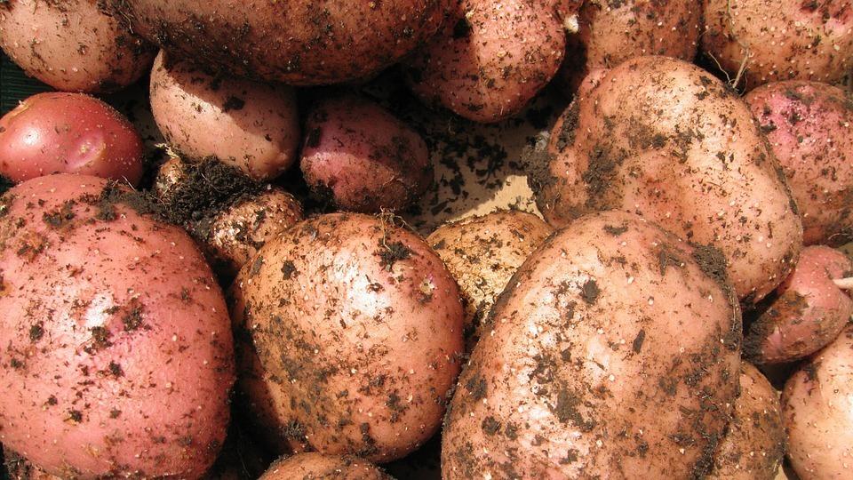 В этом году картофеля в Тамбове меньше чем обычно