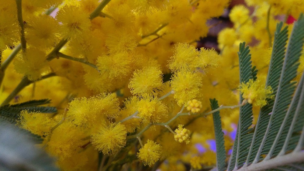 Цветы дамам дарят сотрудники полиции в Мичуринске