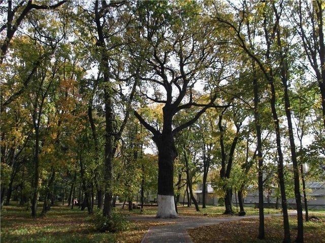 На Тамбовщине может стать на два дерева-памятника больше