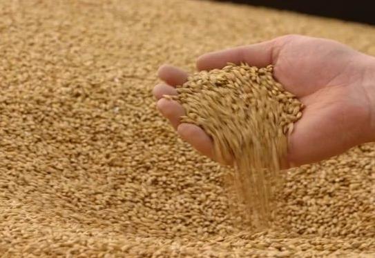 В закрома Тамбовщины собрано 4 миллиона тонн зерна