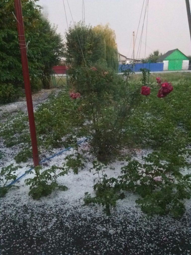 В Тамбовской области прошёл град размером с вишню